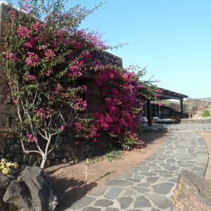 Casa Batosti Pantelleria (32)